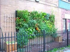 Vertical gardens are pretty popular around these parts, but what about vertical farming? I'm not talking about those upside down tomato plants from the infomercials. I'm talking about the ingenious work of an urban agriculture collective in Vancouver, BC.