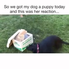 Fantastic cute dogs tips are readily available on our internet site. Funny Animal Memes, Dog Memes, Cute Funny Animals, Funny Animal Pictures, Cute Baby Animals, Funny Cute, Funny Dogs, Diy Funny, Cute Puppies