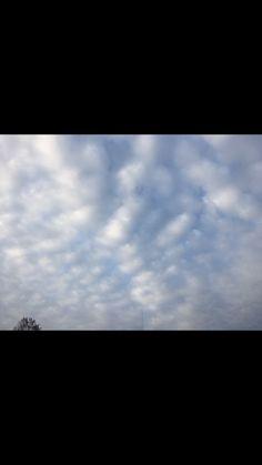 1.12.16 -Alto cumulus stratiformis