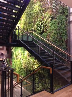 Living Wall At Anthropology