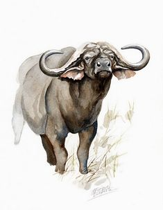 buffalo watercolor | No: 03 | Cape Buffalo Watercolor | 500 Euros