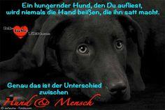 Ein hungernder Hund, den Du aufliest, wird niemals die Hand beißen, die ihn satt macht. … genau das ist der Unterschied zwischen Hund und Mensch …