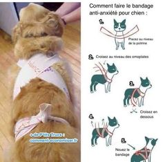 Homemade Thunder Shirt - This Simple Trick Will Help Keep Your Dog Calm During Fireworks Dog Separation Anxiety, Dog Anxiety, Anxiety Tips, Dogs With Anxiety, Anxiety Help, Anxiety Relief, Old Dogs, Pet Care, Dog Training