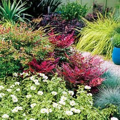 3 pro gardening secrets you need to know: DO opt for easy-care shrubs- Tough shrubs bring color to this border in Sunset's Test Garden in Menlo Park, California. The plants, which thrive on little summer water and require no irrigation in winter, include variegated Cistus corbariensis 'Little Miss Sunshine', flecked with white blooms; bronze-tinged Abelia 'Kaleidoscope'; and red-tinged Nandina domes-tica'Obsession', fringed with cool blue fescue (Festuca glauca 'Beyond Blue').