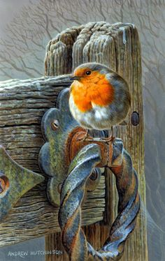 Find highest quality stock images, illustrations and art works created by Andrew Hutchinson. Robin Vogel, Robin Bird, Inspiration Art, Bird Drawings, Watercolor Bird, Watercolor Landscape, Bird Pictures, Wildlife Art, Animal Paintings