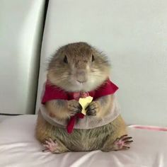 Source: https://www.reddit.com/r/aww/comments/6d8njt/just_a_dapper_prairie_dog_eating_cheese/?utm_content=comments&utm_medium=hot&utm_source=reddit&utm_name=frontpage