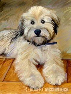 Wheaten Terrier - this looks just like my Mali!