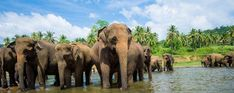 Agence de voyage au Sri Lanka - Voyage au Sri Lanka