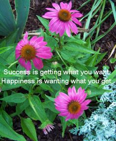 Success vs Happiness quote