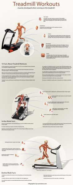 Treadmill Workouts - Infographic providing useful facts on muscles developed when treadmill running treadmill