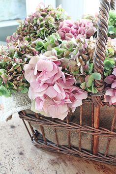 Basket of hydrangeas Hortensia Hydrangea, Hydrangea Flower, Hydrangeas, Hydrangea Garden, Vibeke Design, Flower Basket, Up Girl, Pink And Green, Flower Power