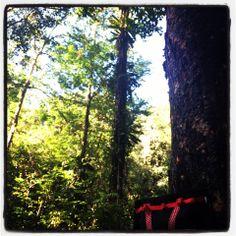 Jungle amazonienne - Guyane - 15/01/14