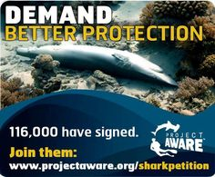 Unregulated and unmanaged. International trade is decimating global shark populations. Demand better protection. Sign the #petition