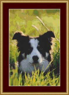 Border Collie Cross Stitch Pattern