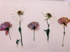 PRESSED FLOWERS. creativehoarders