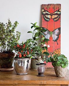 Monte um jardim em vasos sobre uma mesa de madeira rústica. O melhor de tudo é que ele poderá mudar de casa junto com você. Produção de Suze...