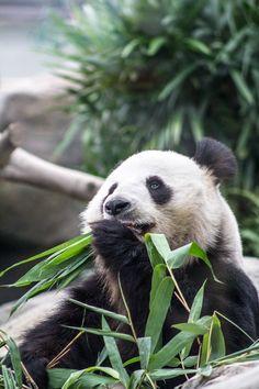 7 Things To Do at Ocean Park Hong Kong. http://globalgirltravels.com/7-things-to-do-at-ocean-park-hong-kong #hongkong #travel