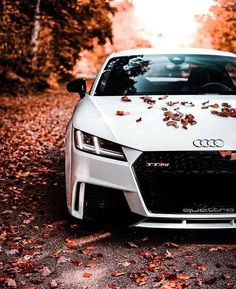 Check out all the awesome cars. Lamborghini Urus is included in the list of luxury cars in the world. This is one of the luxury cars in Europe. Audi A Land Rover Range Rover, etc. Carros Audi, Carros Lamborghini, Lamborghini Cars, Audi Cars, Bugatti, Audi Tt, List Of Luxury Cars, Best Luxury Cars, Bmw Autos
