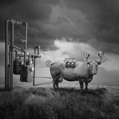 Surreal Portraits Of Animals Traveling The Earth | Bored Panda
