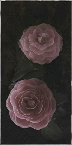"""Flowers In Neutral Moment-2 """"Camellia Japonica"""" Archival pigment print Photo by Soichi Oshika"""