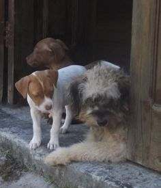 Having an open door makes housetraining go easier; having an older dog to teach right from wrong makes things go that much smoother.