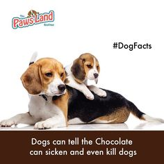#wooformation #dogsfacts #dogs  #wooformation #dogboutique #ilovemydog #instagramdogs #dogstagram #lovedogs #doglover #petinfo #dogs #thepawsland