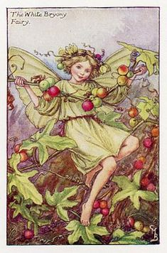 White Bryony Fairy - Cicely Mary Barker's Flower Fairies of the Autumn. Barker, English poet and artist, authored the first of the Flower Fairy books in 1923. The series features delightful illustrations of fairies with flowers of various seasons, gardens and trees.The Flower Fairies of the Autumn was first published in 1926. These prints are from First or early editions of this work.