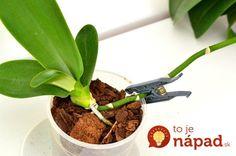 Cum se transplantează un pui de orhidee Garden Tools, Orchid Care, Flower Garden, Flowers, Green Thumb, Balcony Garden, Plants, Herbs, Small Gardens