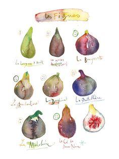 Kitchen art, Fig poster, 8X10 Kitchen Print, Purple Fruit Watercolor painting, Lucile's Kitchen