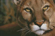 Mountain Lion Portrait - Cross Stitch Chart oh do I want to buy this pattern.
