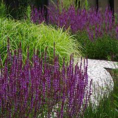 "Polubienia: 278, komentarze: 4 – Colour Your Garden (@colouryourgarden) na Instagramie: ""#modernarchitecture #roofgarden #gardendesign #colouryourgarden #pebbles The planting in this roof…"""