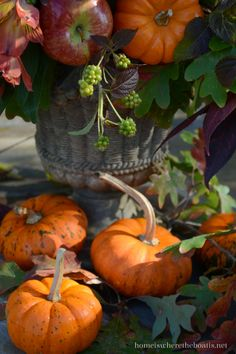 Bountiful and beautiful fall floral arrangement with mini pumpkins and apples… Autumn Day, Autumn Home, Autumn Leaves, Autumn 2017, Autumn Style, Planting Pumpkins, Mabon, Samhain, Fall Pumpkins