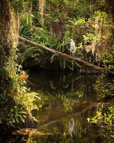 Loop Road - Big Cypress National Preserve - SW Florida