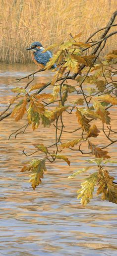 Kingfisher perched on a hanging branch of autumn oak leaves - An original oil painting by Martin Ridley