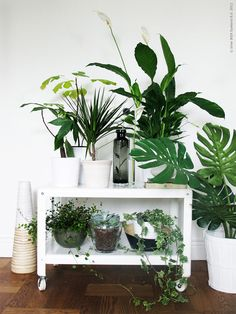 9 Gorgeous Ways to Decorate With Plants - The Nectar Collective using a cart or bench