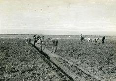 Noordoostpolder. Het graven van greppels. Bron: Fotocollectie Nieuw Land. Directie Wieringermeer, Doorn van.