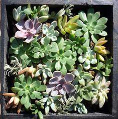 Cool cactus nursery and garden in Berkeley, CA