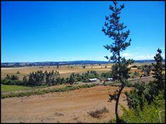 Madihue - Camino a Carahue