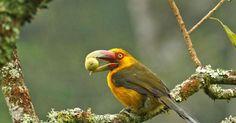 Exposição em Friburgo, RJ, reúne fotos de pássaros na Mata Atlântica