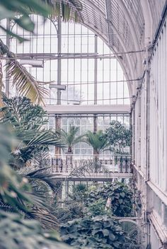 The Palm House in the Garden Society of Gothenburg.
