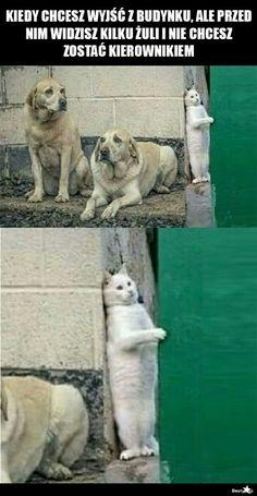 Kierowniku Wtf Funny, Dank Memes Funny, Hilarious, Best Memes, Dankest Memes, Animal Memes, Funny Animals, Funny Mems, Happy Photos