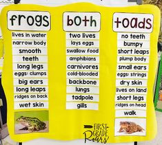 Read all about our fun week learning about amphibians.  We work on the frog lifecycle, compared frogs and toads, learned about characteristics of an amphibian, wrote about them, worked on mini guided reading books, and created amazing research projects on frogs, toads, salamanders, and newts.  Best of all we had so much fun. Perfect for first grade, second grade, and guided work in kindergarten.