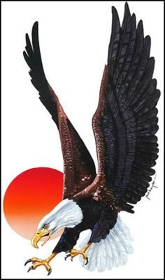 eagle-sun.jpg (236×400)