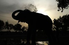 An Indian mahout bathes his elephant on a hot summer day in Allahabad, India, on June 18, 2012.