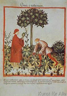 14.+Jahrhundert+-+Hausbuch+d.+Cerruti+/+Gartenkresse/14.Jh