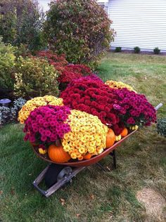 Wheelbarrow full of mums, pumpkins, and gourds in front of other blooming Fall plants. I pin things I love, this is one of them! - Gardening Take