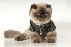 Celebrate National Cat Day With 19 Photos Of Cats Wearing Clothes - MTV