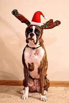 This just screams Happy Holidays, no?