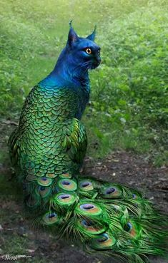 Peacock Cat ♥ I would have that look on my face too if I was half bird!!