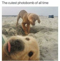 cool 39 Stress Free Memes That Are Fresh And Funny #DogMemes #funnydogmeme